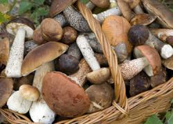 Las Jornadas Micológicas del municipio gaditano de Barbate llegan a su cuarta edición con degustaciones, excursiones al campo y una exposición