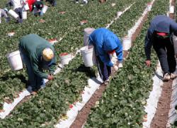 Concentración de los trabajadores del campo en la localidad cordobesa de Nueva Carteya en protesta por la postura de la patronal en las negociaciones del convenio del campo