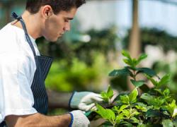 El Aula Mentor de la localidad sevillana de Écija ofrece un nuevo curso online sobre jardinería ornamental y hortícola para toda persona interesada en el correcto cultivo de especies vegetales destinadas al hogar