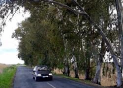 Más de 300 firmas solicitan a la delegación de Medioambiente de la Junta de Andalucía una intervención en las carreteras que unen a Los Palacios con Las Cabezas de San Juan y con el Polígono La Isla debido al peligro que supone la crecida de la vegetación en la zona