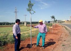 Los Servicios de Jardinería del Ayuntamiento de Campillos inician una campaña de reforestación consistente en la plantación de 300 nuevos árboles en las distintas entradas del municipio