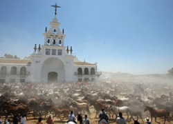 Unos 1.200 equinos semisalvajes saldrán de Doñana a Almonte en la Saca de Yeguas que el próximo 26 de junio celebra su 510 edición