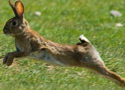 La organización agraria Asaja en Córdoba aplaudela resolución de emergencias cinegéticas por daños de conejos silvestres en 28 municipios