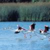 El Parque Nacional de Doñana celebra su 45 aniversario con la cantidad y calidad delagua como principal reto