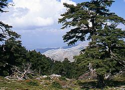 La Junta de Andalucía inicia el proceso para declarar la Sierra de las Nieves como Parque Nacional resaltando los valores ecológico que lo diferencian como el pinsapo y especies de flora exclusivas