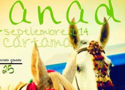 Cártama celebra estos días una nueva edición de la Feria del Ganado de septiembre, una de las tradiciones más arraigadas del pueblo, en la que se exponen cerca de 200 cabezas de ganado