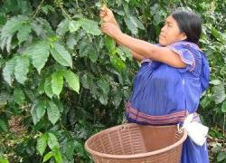 Aprueban en Brasil el proyecto de ley de financiación para promover la agricultura indígena, impulsado por la Comisión de Derechos Humanos del Congreso