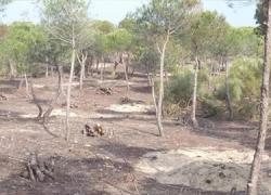 La provincia de Huelva genera 42.092 jornales gracias al programa de mejora forestal y regeneración medioambiental y rural de la Junta perteneciente al Plan de Choque por el Empleo