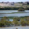 """El Cuervo y Jerez de la Frontera participan en la restauración del humedal de la Laguna de Los Tollos, una iniciativa desarrollada a través del Proyecto """"Life +"""" en colaboración con entidades ecologistas"""