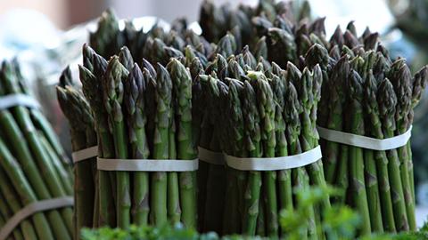 La mayor campaña de recogida de espárrago verde hasta la fecha generará 300 empleos en la comarca de Antequera, donde se están cortando más de 15 toneladas diarias de esta verdura muy asentada en Europa