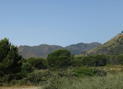 La labor del voluntariado y administraciones propicia tres años después la recuperación parcial del área de 8.225 hectáreas devastadas por las llamas en Alhaurín el Grande, Coín, Marbella, Monda, Mijas y Ojén