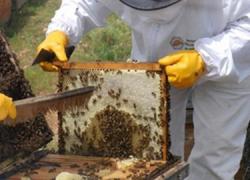 600 apicultores protestan en Sevilla contra las nuevas normas que regulan el sector en Andalucía y exigen una nueva orden que se adapte al carácter trashumante característico de nuestra apicultura