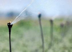 Los agricultores y agricultoras de Alhaurín el Grande podrán formarse en sistemas de regadío localizado gracias a unas jornadas impartidas por el Instituto de Investigación y Formación Agraria y Pesquera
