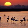 """Doñana promociona hasta el 27 junio su oferta de ecoturismo con la experiencia """"Fam trip"""" """"Doñana al natural"""" para dar a conocer el turismo de naturaleza de la comarca del entorno al Parque Natural"""