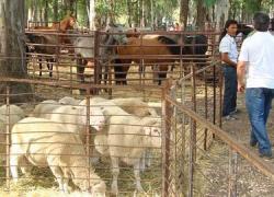 La localidad malagueña de Coín celebra esta semana su fiesta patronal, un acontecimiento con actividades para todos los públicos como la subasta del Mejor Tomate 2015 y las atracciones para los más pequeños