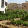 Los vecinos y vecinas de la localidad de Huércal de Almería interesadas podrán solicitar al ayuntamiento la concesión de huertos urbanos en la Oficina del Servicio a la Atención a la Ciudadanía
