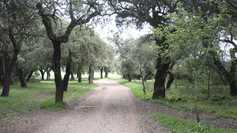 El Parque Natural de la Sierra de Hornachuelos, en la provincia de Córdoba, ofrece seis senderos oficiales, además de uno extraoficial donde bosque, montaña y agua se mezclan de manera singular