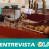 """""""Contamos con una exposición de instrumentos de música tradicional de África donde podemos apreciar la riqueza cultural que encierra este continente"""", Javier Ballesteros, Cultura y Cooperación con África"""
