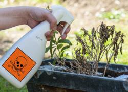 La delegación de Ecologistas en Acción en Roquetas de Mar presenta a los diferentes partidos políticos con representación en el consistorio una propuesta de moción contra el uso de los herbicidas químicos
