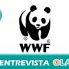 """""""Si sigue este nivel de capturas es muy probable que las pesquerías sobreexplotadas aumenten, como en el Mediterráneo, donde el 90% de las evaluadas están en esa situación"""", Celia Álvarez, Programa Marino WWF"""