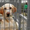 San Juan del Puerto aumenta su inversión contra el abandono animal con el fin de mejorar el refugio provincial con un quirófano, el acondicionamiento del suelo y la habilitación de una zona de esparcimiento