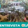 """""""El Biodomo propone un recorrido acuático, terrestre y aéreo por las selvas tropicales y arrecifes coralinos para conocerlos y respetarlos"""", Javier Pérez, Ciencias de la Vida Parque de las Ciencias de Granada"""