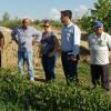 Los municipios granadinos de Guadix y Benalúa piden la declaración de zona de emergencia por el granizo caído la semana pasada que afectó gravemente a los cultivos de varios agricultores de la zona