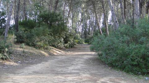 Los caminos rurales afectados por las lluvias torrenciales del pasado año en el término municipal de Chipiona podrán ser rehabilitados en los próximos meses