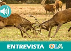 El P. N. Sierras de Cazorla, Segura y Las Villas se prepara para coger a los visitantes que acuden a contemplar uno de los espectáculos naturales más estremecedores: la berrea