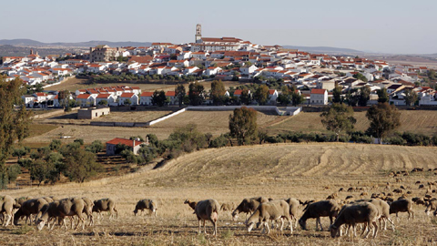 Fuente Obejuna celebra este fin de semana su 24ª Feria Agrícola y Ganadera y su 16ª Feria Agroalimentaria, en donde reúne a personas empresarias del sector agropecuario
