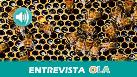 Greenpeace pide paralizar las fumigaciones aéreas en Andalucía porque matan a las abejas y contaminan los cultivos, tanto los ecológicos como los convencionales