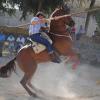Continúan los preparativos para la celebración de la cuarta edición de la Feria del Ganado de Paradas con la novedad del Concurso de Aceitunas Aliñadas
