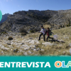 La restauración de los neveros, estructuras creadas para almacenar nieve, recuerdan la labor de los arrieros en la Sierra de las Nieves de Málaga