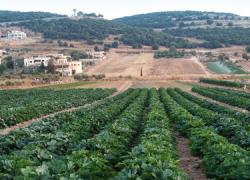 188 trabajadores agrarios granadinos quedan excluidos del PFEA y la Diputación denuncia que no se ha querido buscar una solución desde el Gobierno