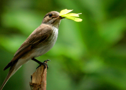 La Asociación Deportiva Visueña de Silvestrismo organiza el XVI Concurso Local D-1 de El Viso del Alcor, en el que participarán unas 200 especies de aves