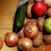 El alumnado de Infantil y Primaria de 175 centros escolares de Granada disfruta de múltiples actividades formativas sobre hábitos alimenticios saludables