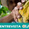 La agroindustria está ocupando el territorio con un modelo intensivo y desplazando a los campesinos, una situación que comienza a darse también en España