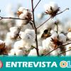 COAG Andalucía pide precaución por la posible entrada de semillas de algodón transgénico de Argentina y recuerda que solo una de sus variedades está autorizada en Europa