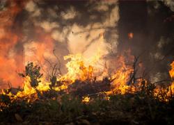 Marbella comienza una campaña de prevención de incendios centrada principalmente en sus urbanizaciones