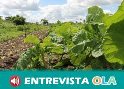 Asaja muestra preocupación por la escasez de lluvias y el excesivo calor que están afectando a cultivos como el olivar