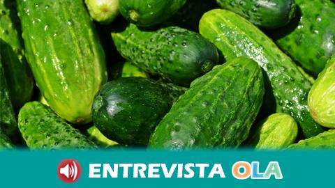Andalucía defiende la calidad y la seguridad de la producción hortofrutícola de la comunidad tras el cierre de la crisis del pepino