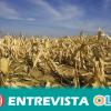 El sector primario andaluz pierde 800 millones de euros por la sequía, siendo los cultivos de secano, como el olivar, los más afectados