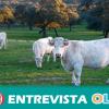 La digestión de las vacas, junto con el uso de la tierra que requiere su mantenimiento, libera más gases que todo el sector mundial de transportes
