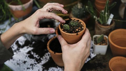 El Proyecto Ribete organiza una serie de talleres para jóvenes sobre jardinería y refuerzo escolar en El Cuervo