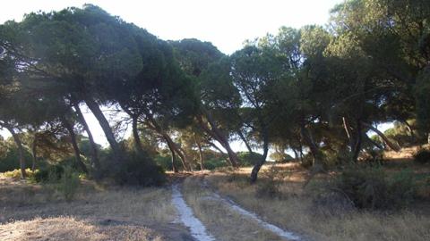 Una zona de refugio de animales cerca de la Laguna de las Madres, en Mazagón, se encuentra afectada por la tala de árboles