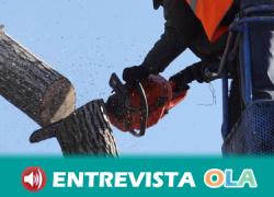 El Ayuntamiento de San Juan de Aznalfarache defiende la transparencia del proyecto de tala de árboles y lo considera necesario para garantizar la seguridad ciudadana