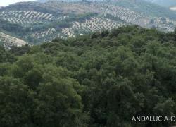 El Bosque de la Bañizuela, reclamo de turismo rural sostenible para Torredelcampo