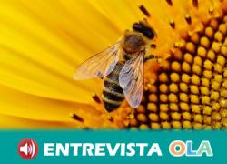 Greenpeace aplaude la decisión de prohibir tres insecticidas peligrosos pero advierten de que este paso se debe acompañar de una apuesta por la producción ecológica