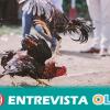 Una propuesta de ley busca garantizar en Andalucía la protección de animales y erradicar el maltrato, prohibir la venta de animales por particulares
