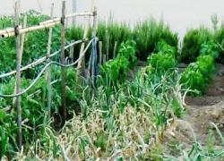 Guillena cuenta con nuevos huertos urbanos para fomentar la sensibilización ambiental y la convivencia intergeneracional